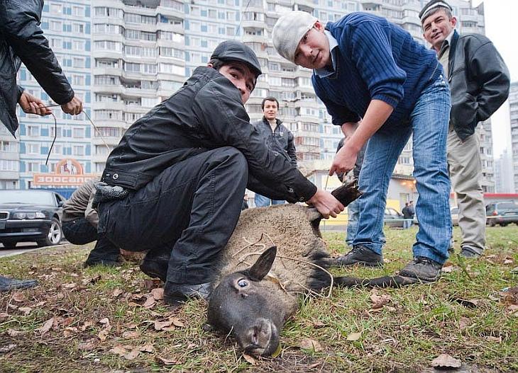 19 ноября деятели культуры попросили мэра Москвы запретить публичные жертвоприношения баранов