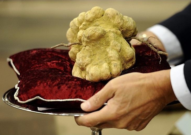 14 ноября в итальянском городке Альба ушел с молотка 900 граммовый белый трюфель