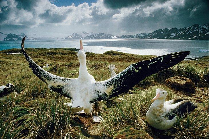 Телеэпопея National Geographic «Великие миграции»