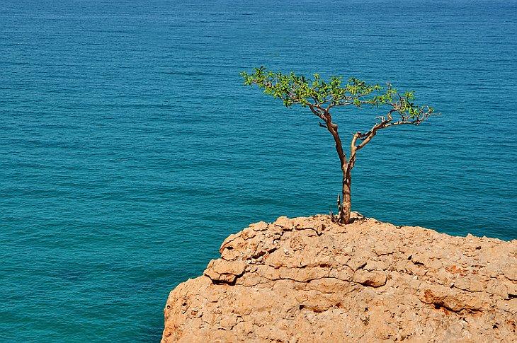 Красоты острова Сокотра в Индийском океане