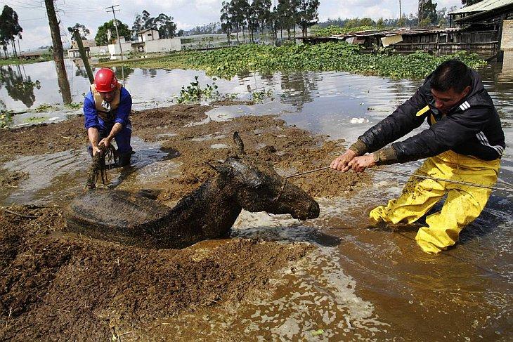Фермеры спасают лошадь, увязшую в грязи