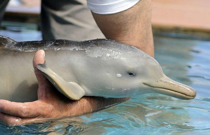 Спасенный дельфинчик
