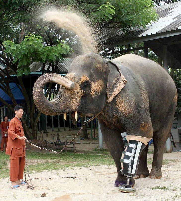 Бионический слон