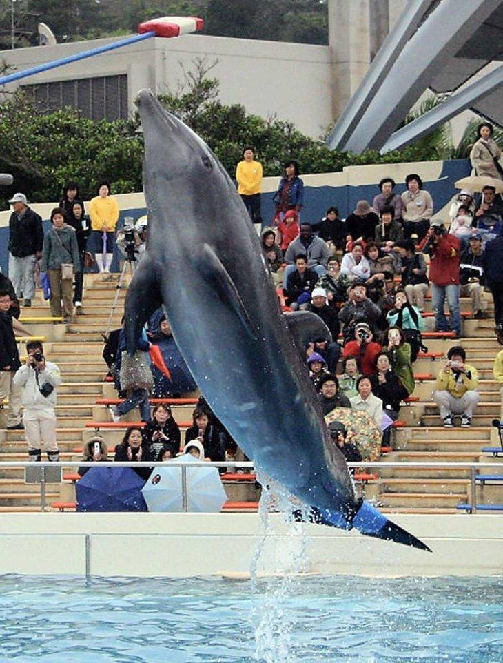 Бионический дельфин