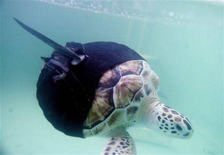 Протез для черепахи