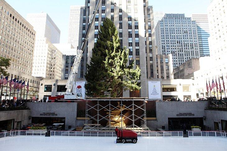 12 ноября 2010 около Рокфеллер-центра в Нью-Йорке же установили Рождественскую елку