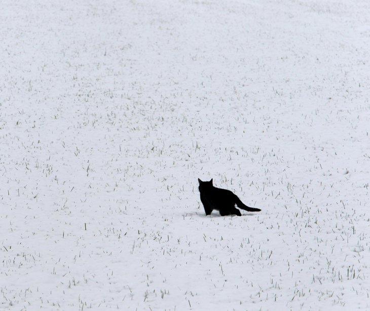 Кошка ищет мышей в заснеженном поле в Германии
