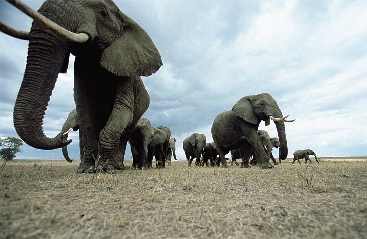 Слоны из Мали