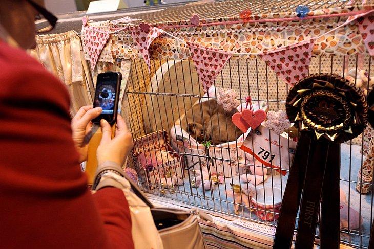 Крупнейшая в Европе выставка кошек Supreme Cat Show 2010