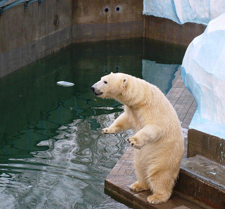 Позитив: мишки в зоопарке Новосибирска