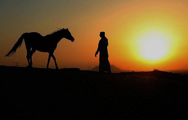 Лошадь а Абу-Даби