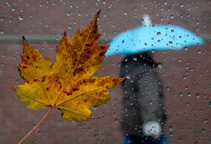 Кленовый лист на стекле автомобиля во время дождя в Ванкувере