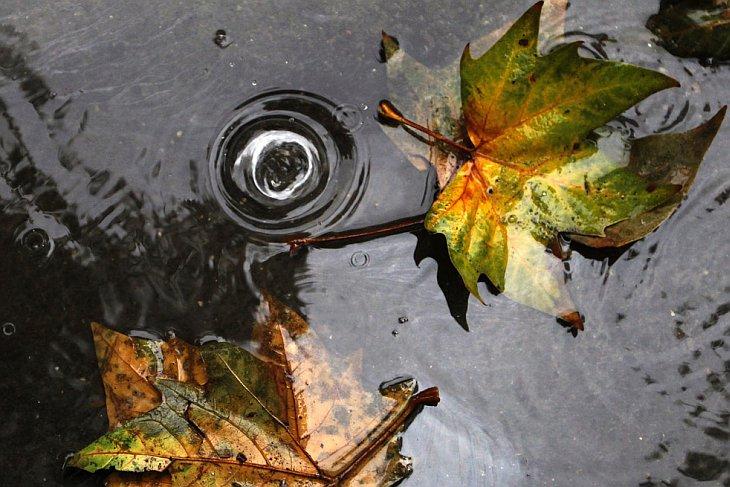 9 ноября 2010 в Париже тоже был дождь
