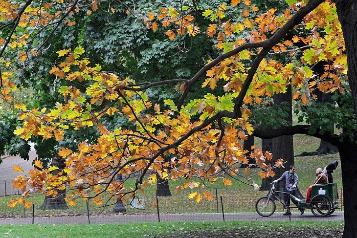 Осенние листья в Нью-Йоркском Центральном парке 5 ноября 2010