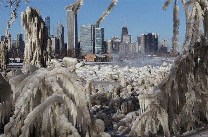 Обледенелые деревья и трава у озера Мичиган в Чикаго