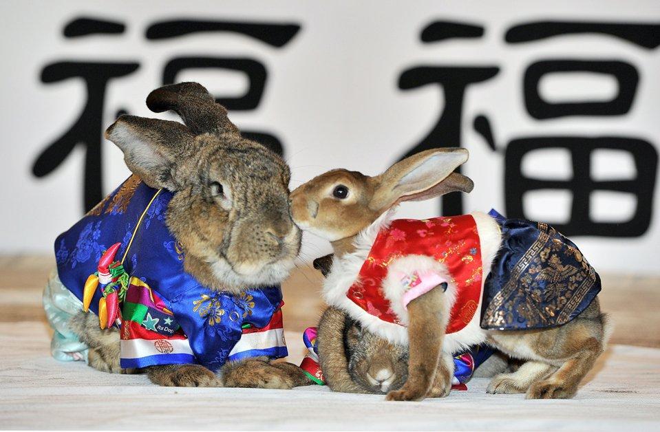 Кролик 2011 год