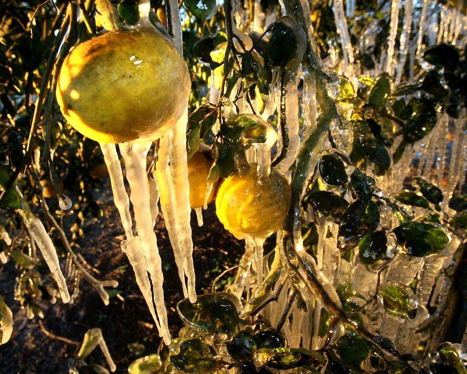 Заморозки во Флориде