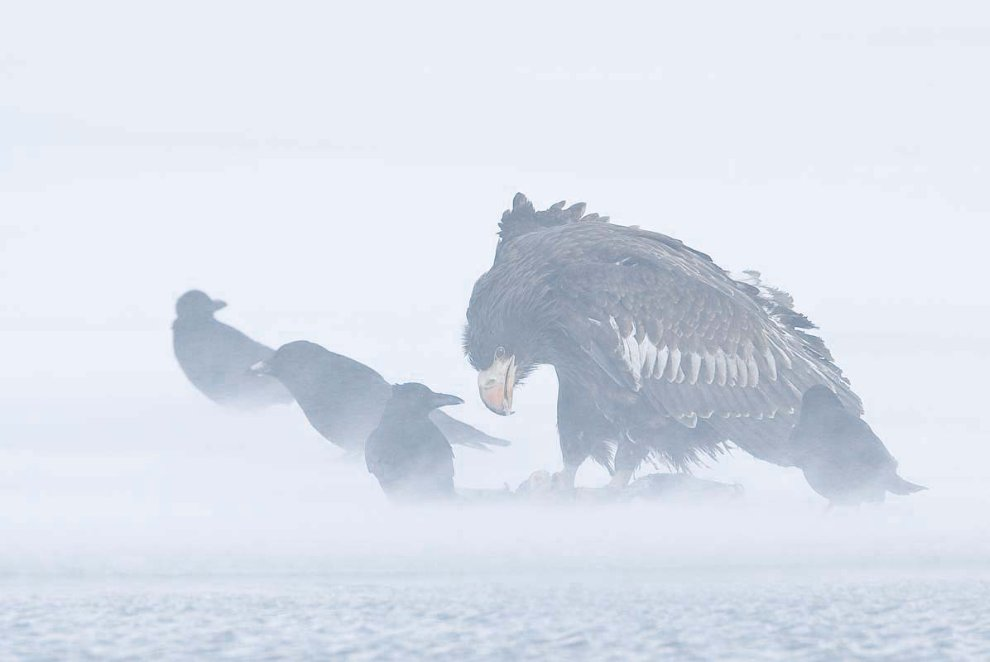 Орланы