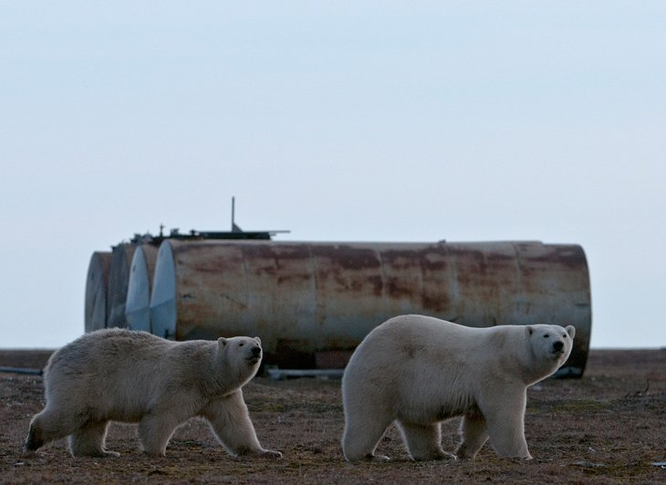 Не прекрасная Арктика