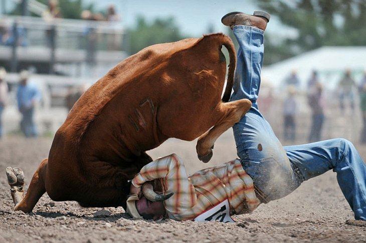 Родео — это традиционный вид спорта в Северной Америке