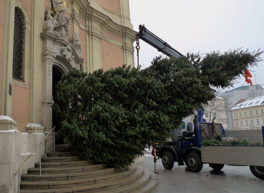 Рабочие пытаются установить рождественскую елку в церкви Святой Троицы в Братиславе