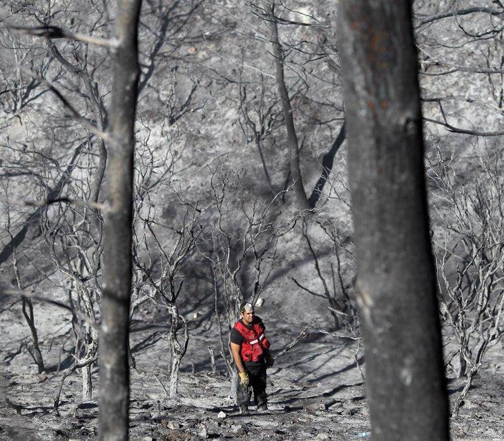 Пожарный ищет тела погибших по время пожара в лесу Кармель около города Хайфа