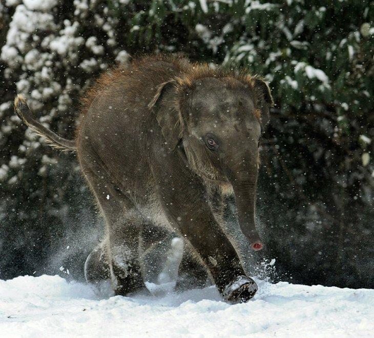 Слоненок в зоопарке Ганновера