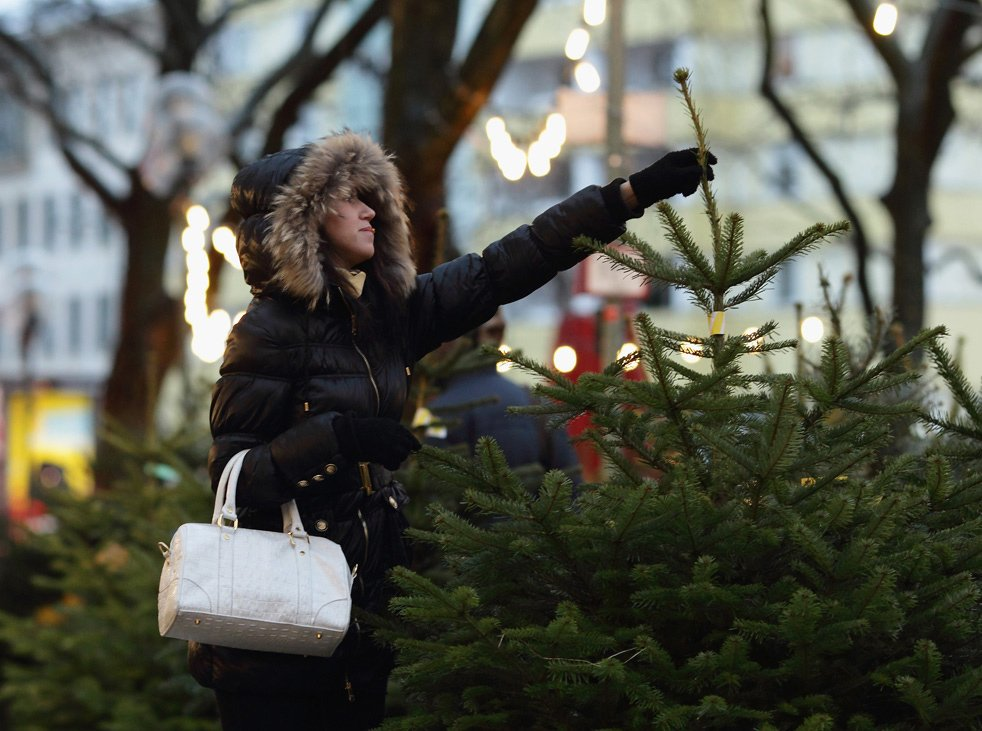 Охота за новогодними елками в Германии