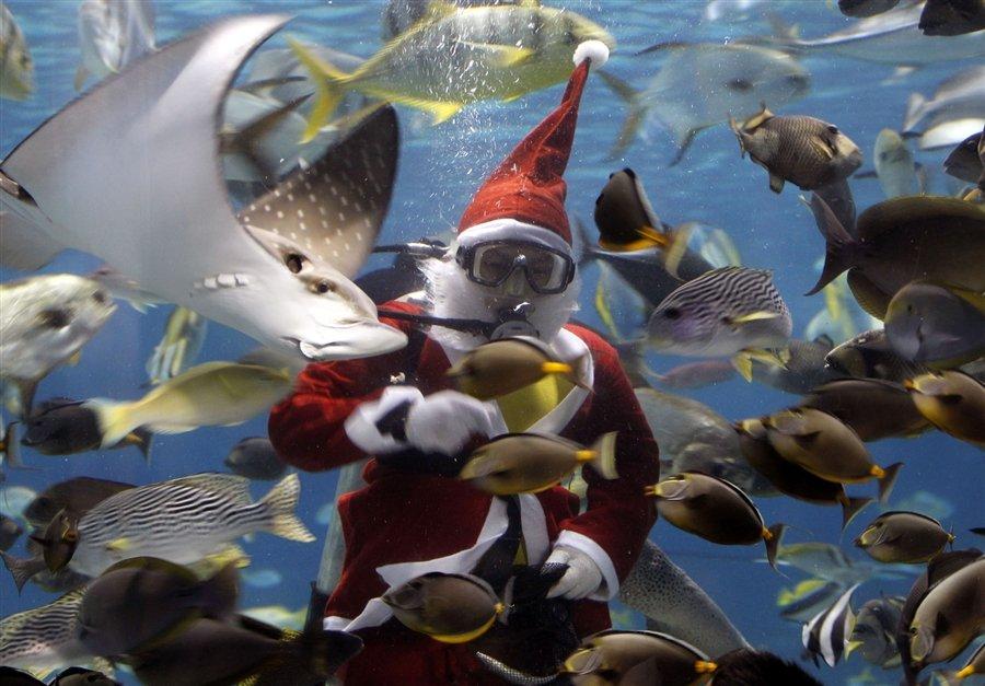 Водолаз в костюме Санта-Клауса кормит рыб