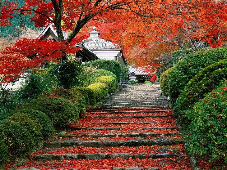 Красоты арасиямы япония