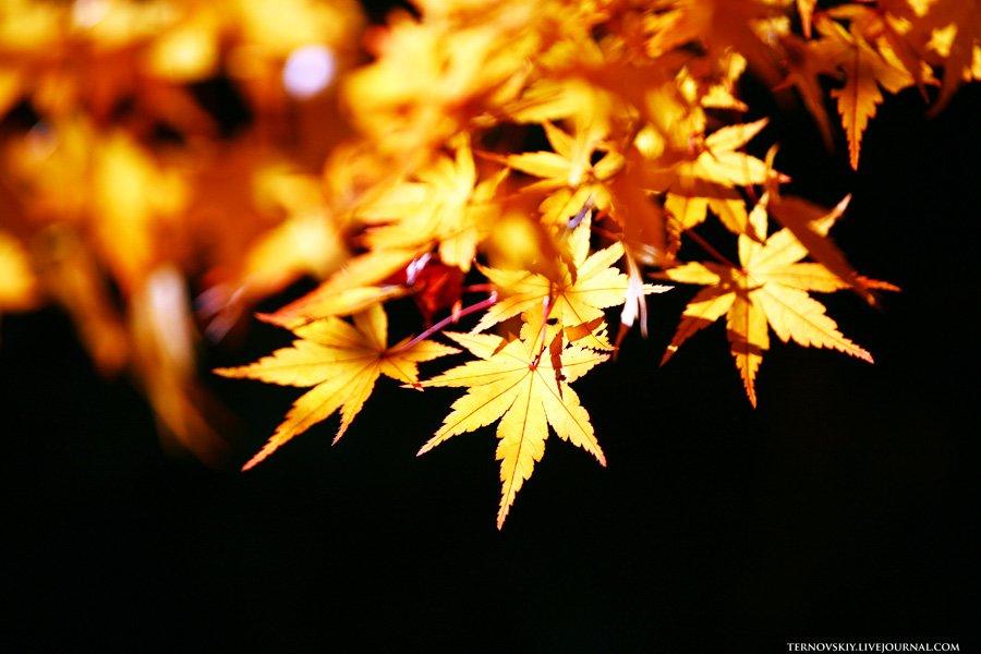 Красоты Арасиямы. Япония