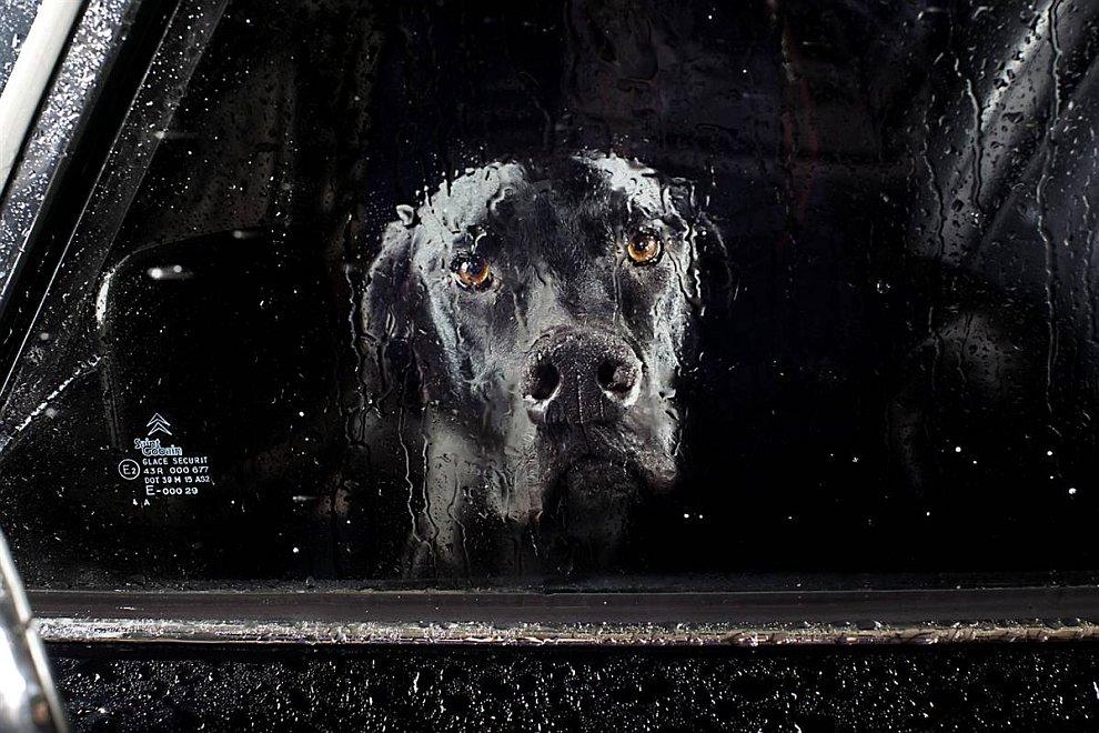 Собака ждет своего хозяина в машине