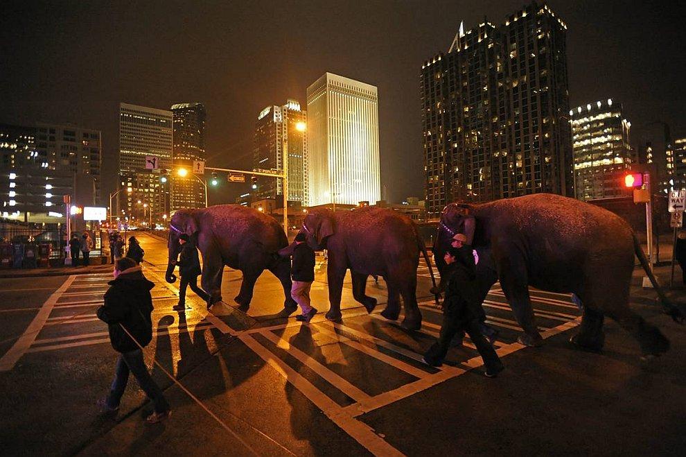 Группа слонов из цирка идет по улицам ночного города