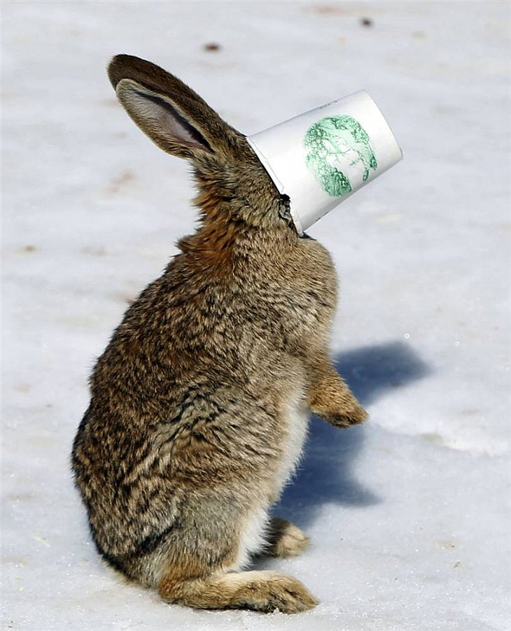 Застрял. Кролик пытался добраться до еды на дне стаканчика