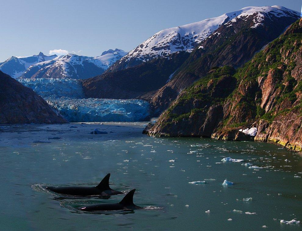 Касатки и айсберги