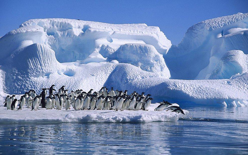 Антарктида. Пингвины