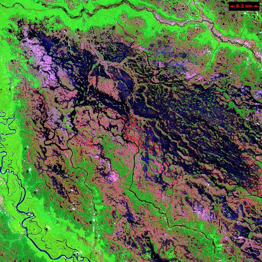 Болотистая местность вокруг бразильской реки Демини