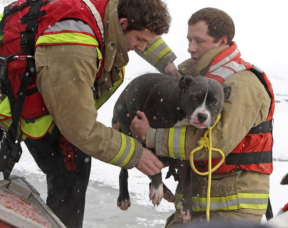 Пожарные спасли собаку по имени Эмма