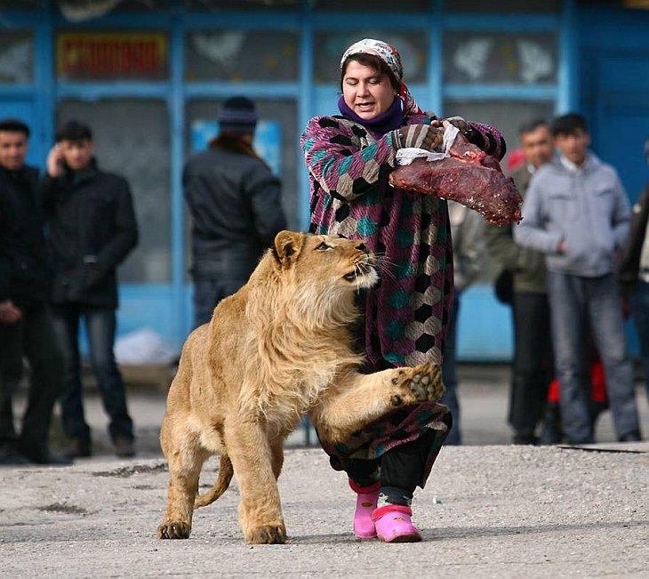 Животные в фотографиях за неделю (17 — 23 января 2011) (www.LoveOpium.ru)