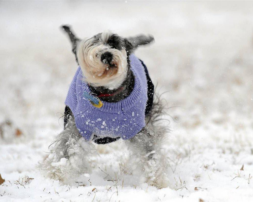 Радуемся снегу! (www.LoveOpium.ru)