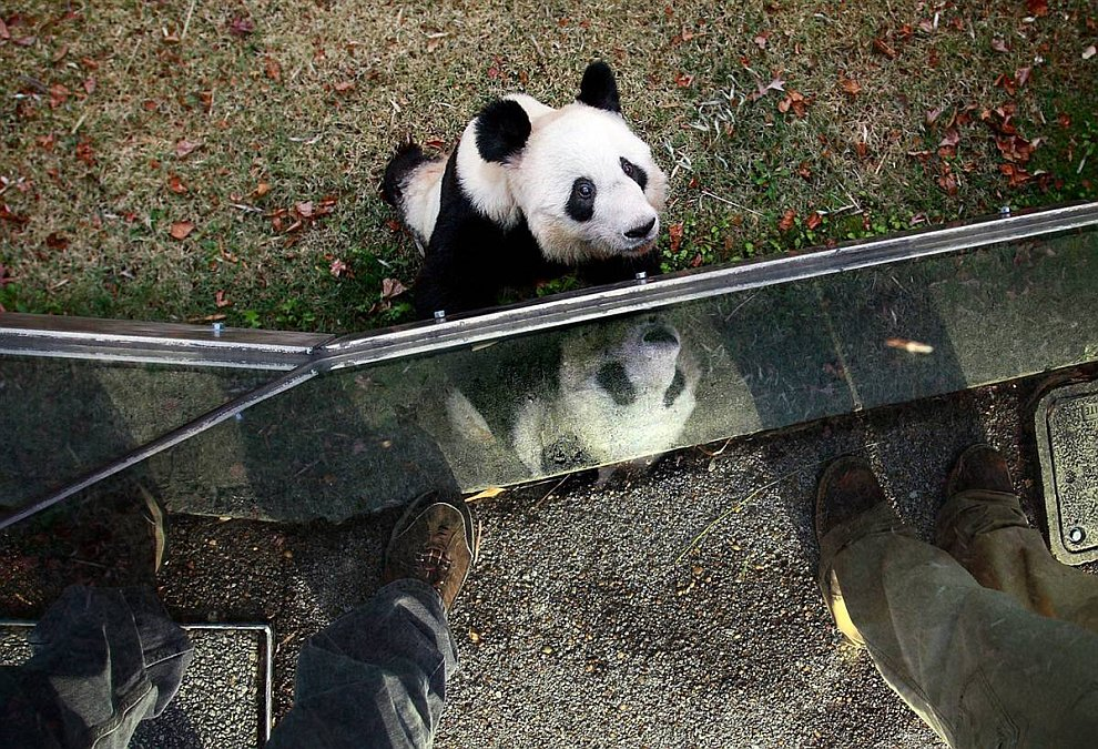 Панда (www.LoveOpium.ru)