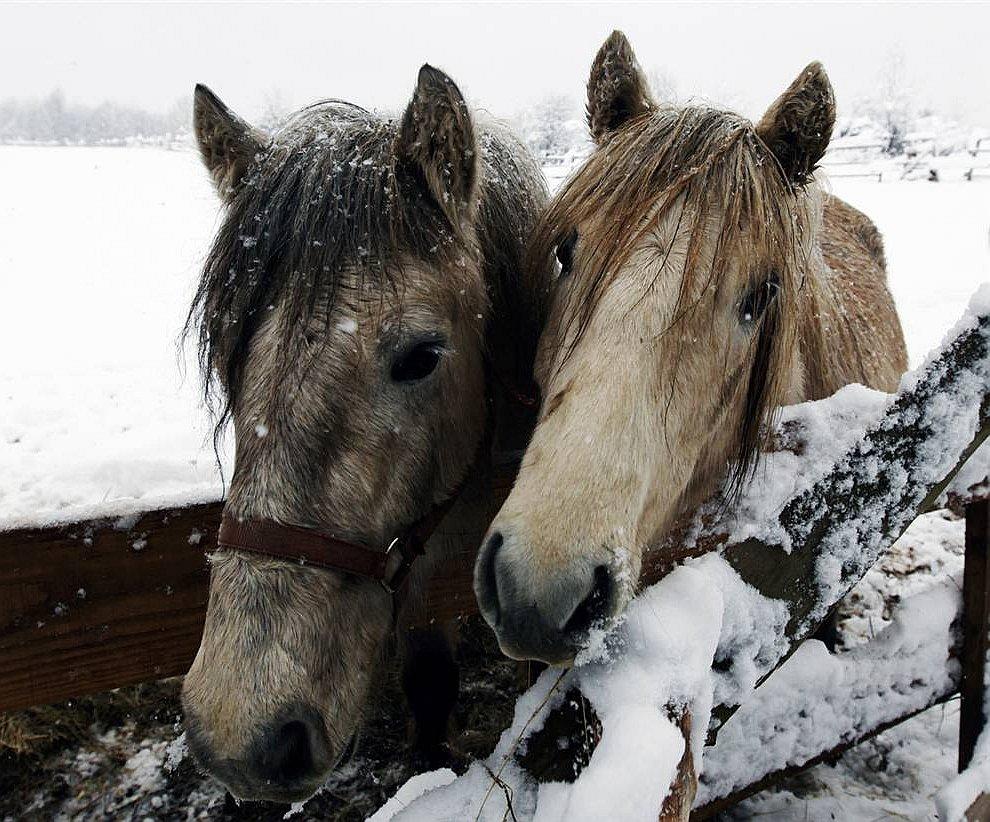 Горные пони (www.LoveOpium.ru)