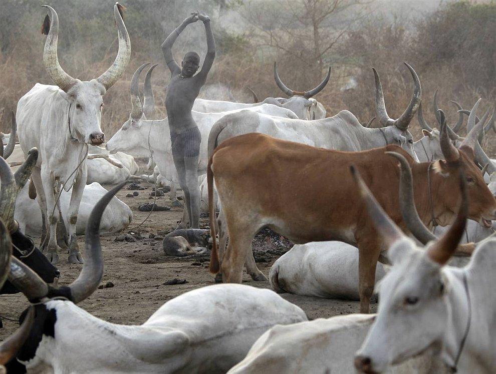 Пробуждение утром на пастбище на юге Судана (www.LoveOpium.ru)