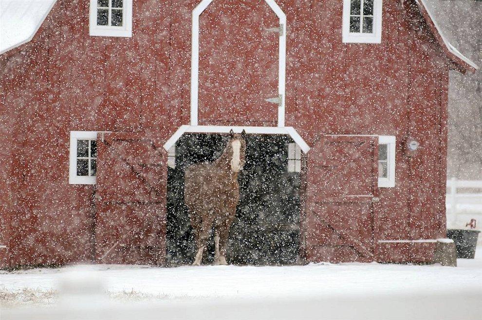 Лошадь  (www.LoveOpium.ru)