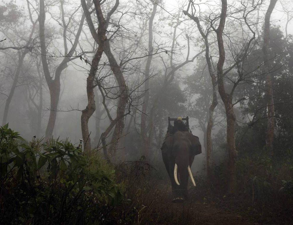 Погонщик со своим слоном (www.LoveOpium.ru)