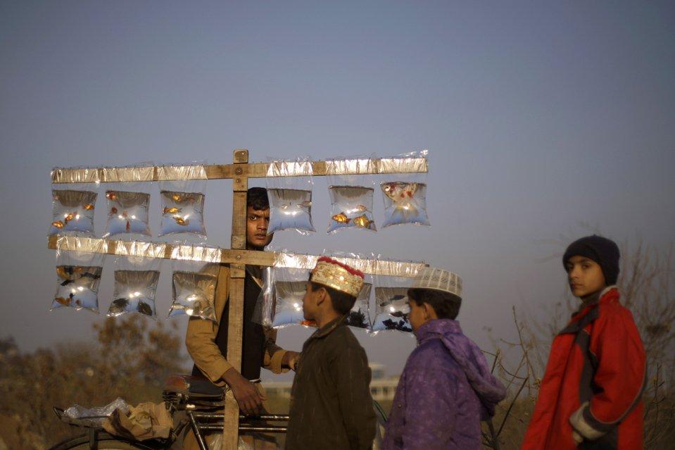 Продавец рыбок в Пакистане
