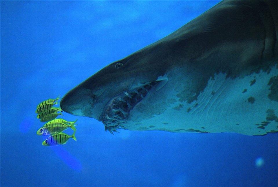 В Гонконге открылся новый аквариум