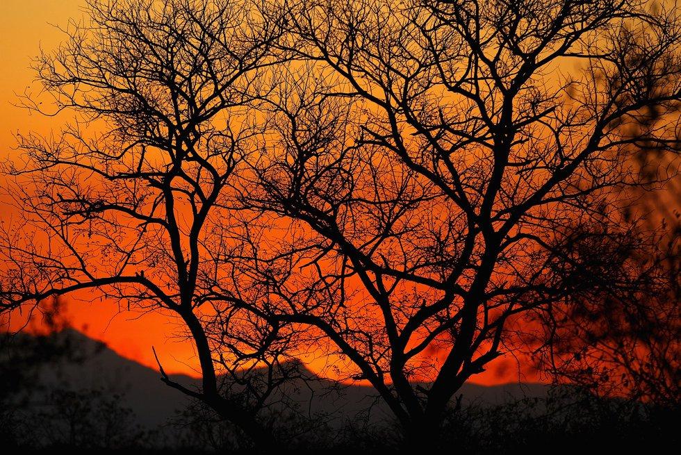 Природа Национального парка Крюгера в Южной Африке
