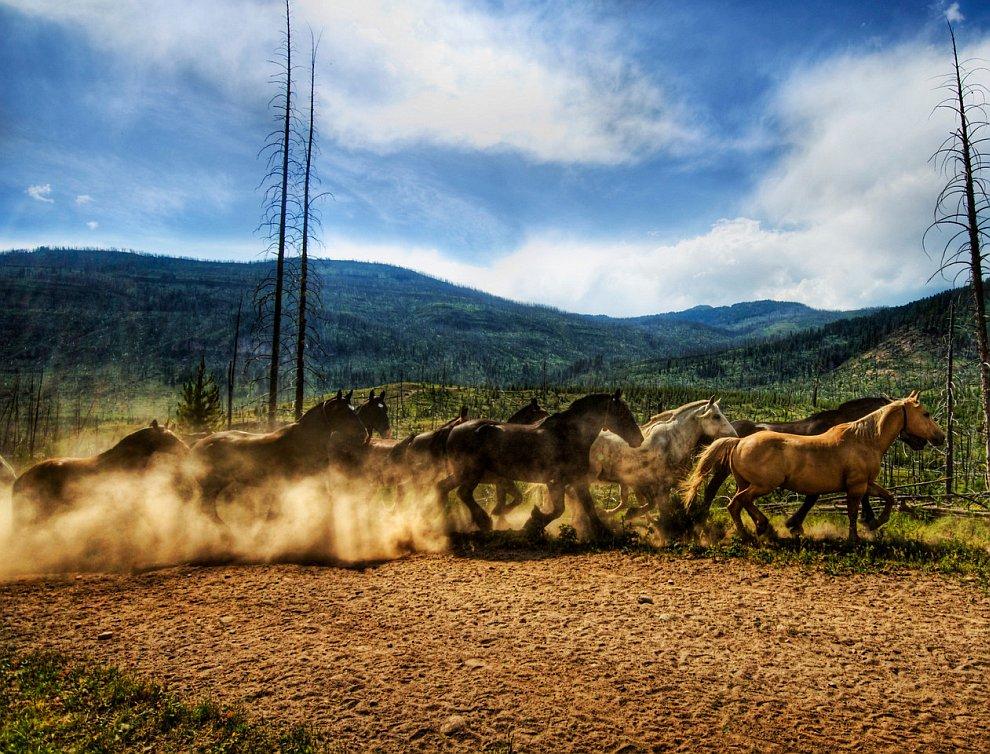 Табун диких лошадей в Национальный парк Йеллоустоун