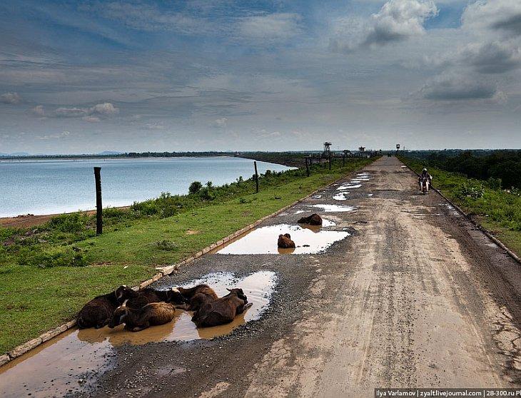 Дом для слонов — Национальный парк Удавалаве в Шри-Ланке